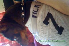 Pets in Game Day Gear